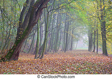 Autumn forest park in the morning fog
