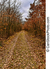 Autumn forest path covered with fallen leaves