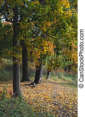 autumn forest. path with yellow fallen leaves