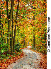 Autumn forest - Pathway through the autumn forest