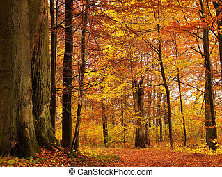 autumn forest - red autumn forest
