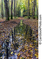 autumn forest, reflection of trees in puddles, fallen yellow leaves