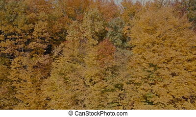 autumn forest removed from height