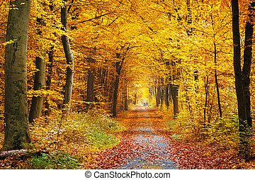 Autumn forest - Road in the autumn forest