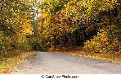 Autumn Forest, Road With Yellow Leaves
