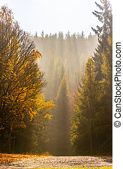 Autumn forest scene. Ray of lights in morning haze