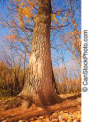 autumn forest scene, tree trunk
