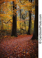 Autumn forest scene. Walking path in golden colored foliage leaf fall between big trees.