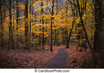 Autumn forest scene. Winding walking path foliage leaf fall and puddle