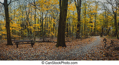 Autumn forest scene with empty bench. Winding walking path foliage leaf fall.