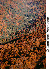 autumn forest scenery aerial view