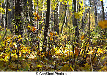 Autumn forest scenery