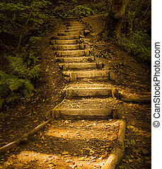 Autumn forest steps