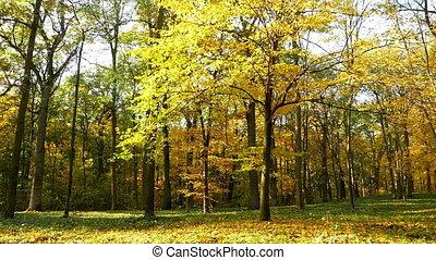 Autumn forest sun trees - Shot of the sun shining through...