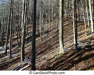 Autumn forest - tree trunks - view
