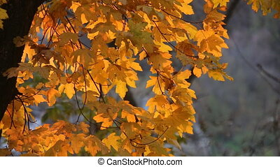 Autumn forest. Trees and leaves in sun light