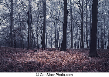 autumn forest, trees in the fog, dry weather