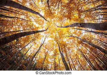 autumn forest treetops