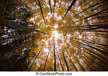 autumn forest treetops (intentionally distorted image; shot...