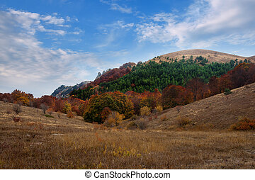 Autumn forest under a blue sky with clouds