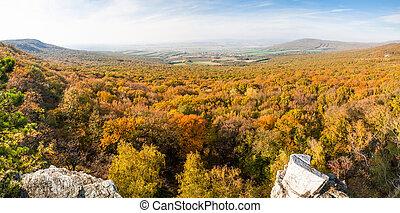 Autumn forest valley