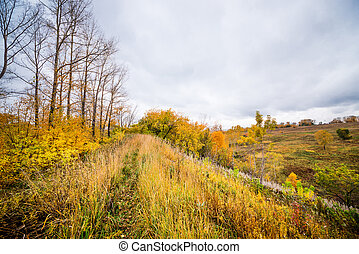 Autumn forest view