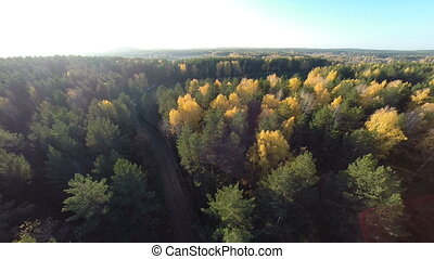 Autumn forest view from above