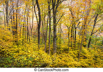 Autumn Forest Western NC Fall Foliage Trees Scenic Nature...