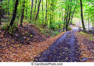 Autumn forest, winding road, bridge it.
