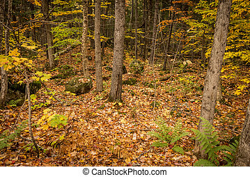 Autumn Forest with Fallen Leaves