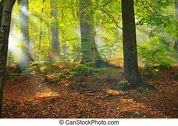 Autumn forest with golden leaves
