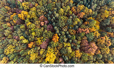 Autumn forest with green and yellow leaves, aerial drone view