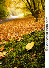 Autumn forest with nearby road. Focus is on leaf.