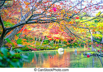 Autumn forest with river