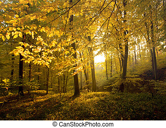 Autumn forest with sun beam