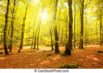 Autumn forest with sun beam.