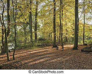 autumn forest with the golden brown leaves