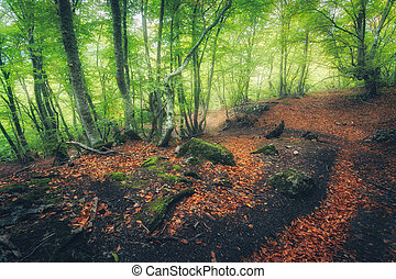 Autumn forest with trail in fog. Dreamy landscape