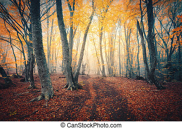 Autumn forest with trail in fog. Fall woods