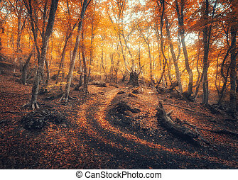 Autumn forest with trail in fog. Foggy trees in fall
