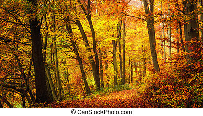 Autumn forest with warm colors