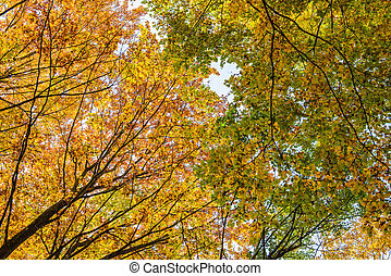 Autumn forest with yellow leaves