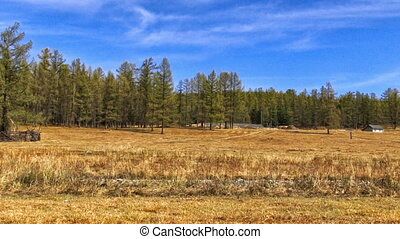 Autumn Forest - Yellow autumn forest with pine branches in...