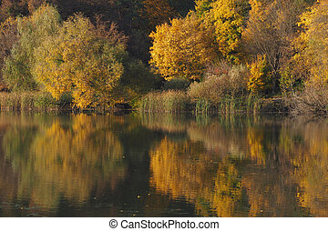 Autumn forest: yellow trees reflect on surface of the forest lake, foliage lit by the sun becomes golden.