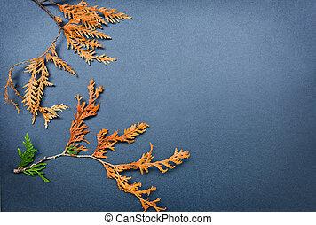 Autumn frame, cedar, arborvitae