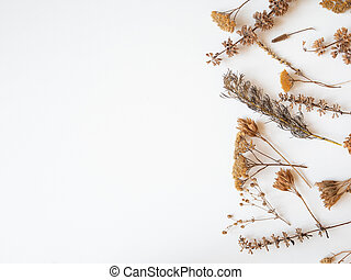 Autumn frame of dried different plants and flowers on white background. Top view. Flat lay. copy space