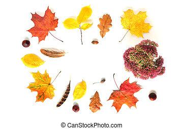 Autumn Frame on White