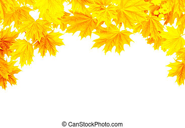 Autumn frame with yellow leaves of a maple
