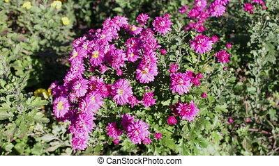 Autumn garden flowers