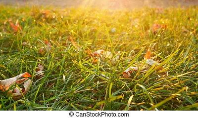 Autumn garden leaves yellow